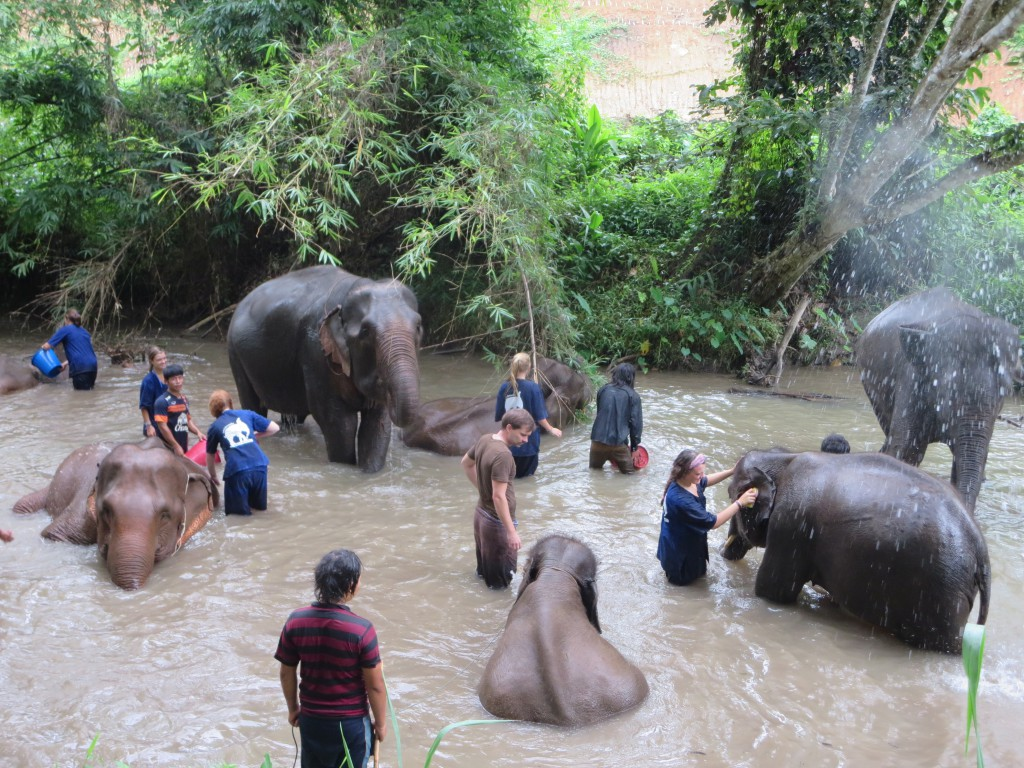 Tong Bai Foundation offers the Tong Bai Elephant Tour