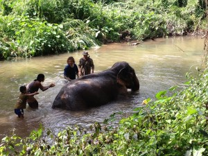 Tong Bai Elephant Tour Mae Boontong bathing